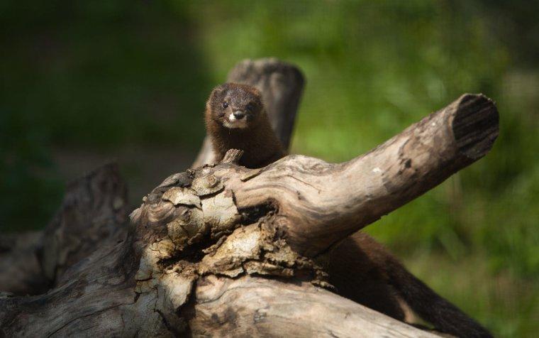 Biodiversité : la faune française continue de s'appauvrir à un rythme alarmant...