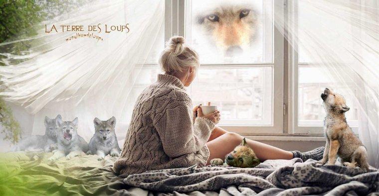 Le loup roux pourrait disparaître d'ici huit ans... Le mimétisme du loup : quelle est la couleur de Canis lupus italicus ???