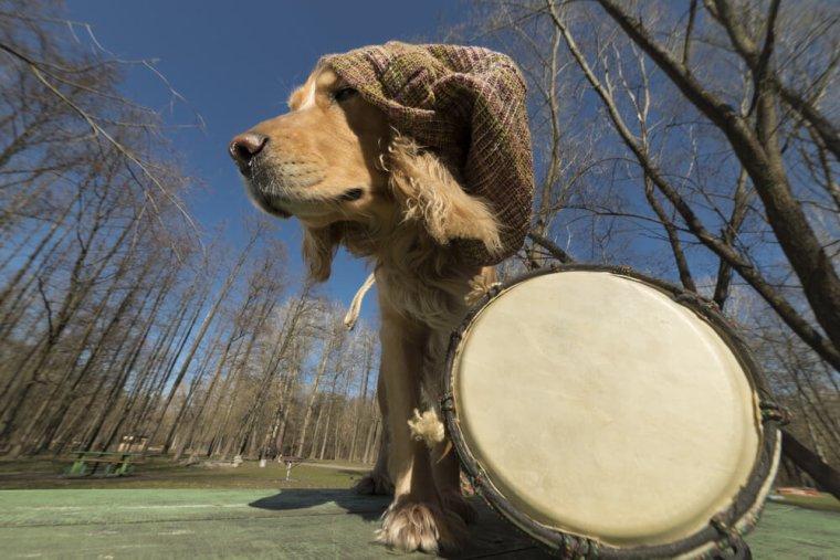 C'est prouvé : le reggae adoucit les chiens  :)