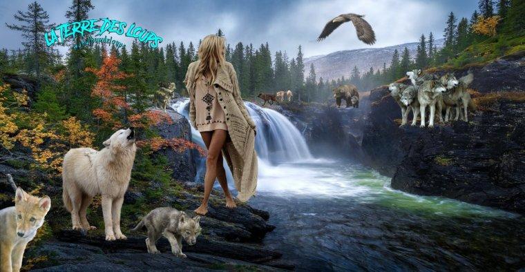 Un couple de loups gris attend ses petits :  Ces deux loups gris, ou loups communs, sont en train de fonder leur meute. Cette femelle mettra bientôt bas une portée d'un à onze louveteaux....