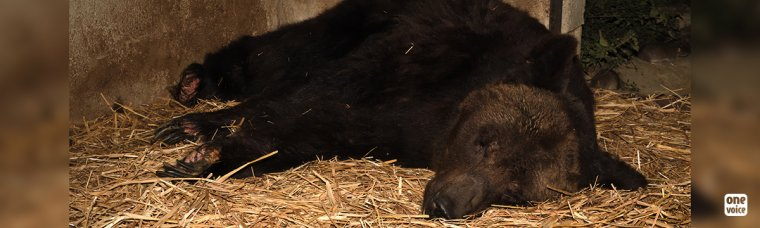Micha, Glasha et Bony trois ours de cirque mourants dans des cellules en France PETITION signez svp pour eux nos sans voix :'(