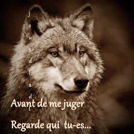 """Bande d'ordures !!!!!!!!!!! le pire l'état est entrain de faire le même avec vous !!!!!  réagissez secouez vous là !!!!!!!!!!!!!!!!!! Haute-Marne : le préfet va autoriser les tirs mortels sur le loup s'ils ont pour but de """"protéger un troupeau en danger"""""""