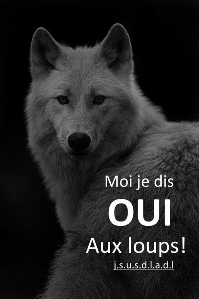 Mortalité des loups – 2021