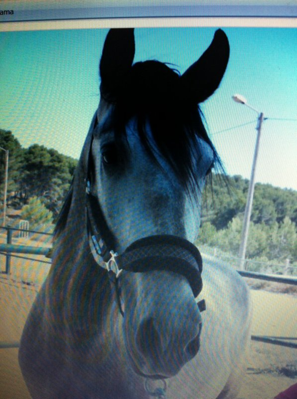 My horse !!!