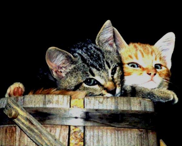 Nous sommes deux!^^