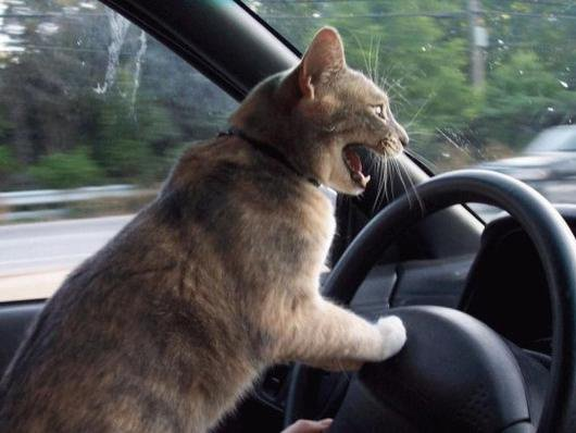 Mais regarde un peu ces imbéciles sur la route!^^