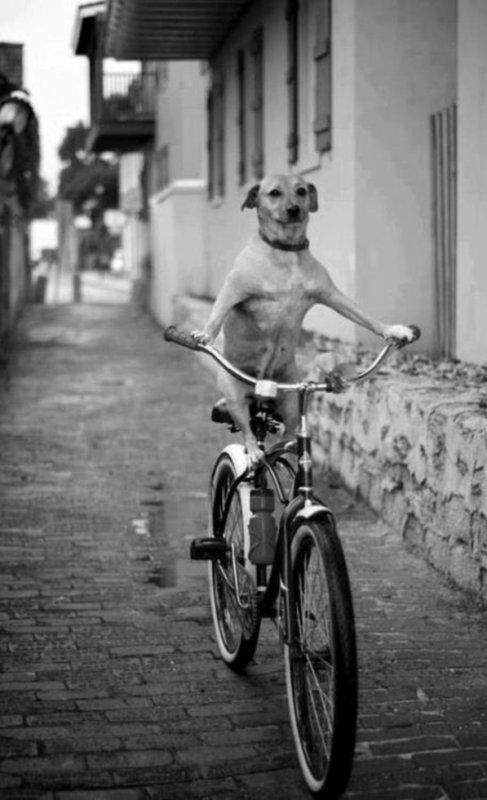 Oui je roule à vélo eh alors hein!^^