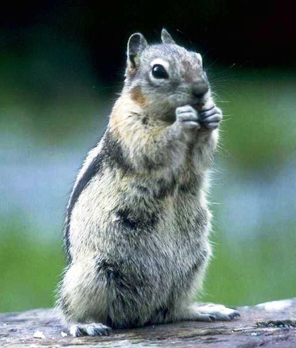 Oui, je suis un écureuil...^^ (3