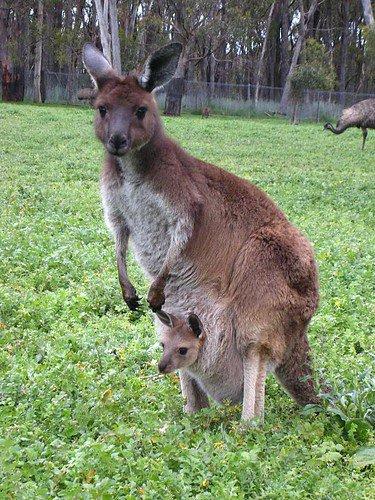 Une maman dans la prairie, avec son petit^^