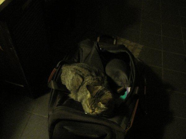 déjà 31 semaine que tu es partie mémère - Hommage as mémère une de mais chatte décède