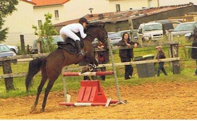 L'équitation est pour les amoureux  du cheval bien plus  qu'un sport,  c'est une véritable passion  qui nous redonne vie au simple  contact de l'animal.
