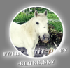 polux-petit-poney-blanc
