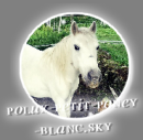 Photo de polux-petit-poney-blanc
