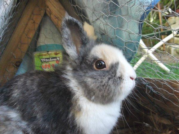 Sommaire (Bo-Bies mon lapin de coeur)