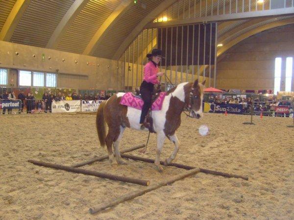 Epreuve de trail salon du cheval mons famille et animaux - Salon du cheval a mons ...