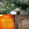 Evénement ; Kristen in France again.   Mardi 26 juin : Stew était à Paris, pour un dîner organisé par la marque Balenciaga donc Kris en est l'égérie.