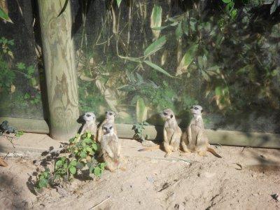 zoo  des sables d'olonnes