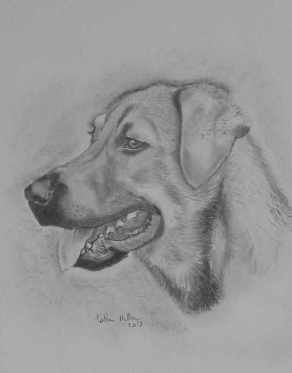 portrait du chien de mon beauf' et de ma belle soeur