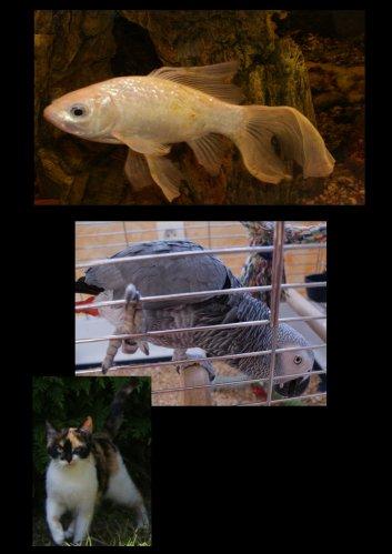 Les animaux ! :)
