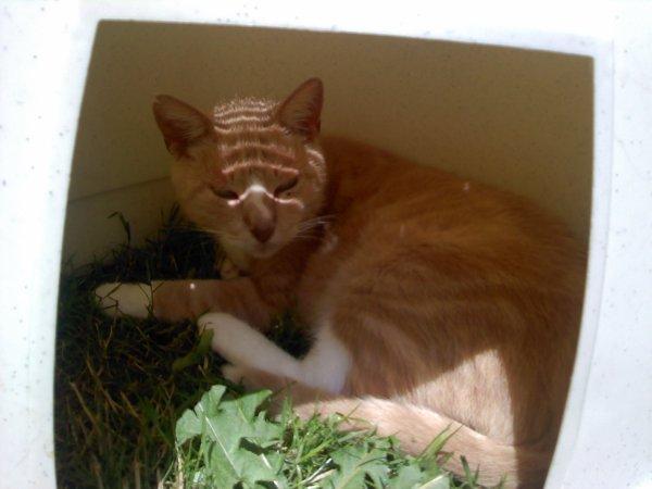 mon chat Téquila
