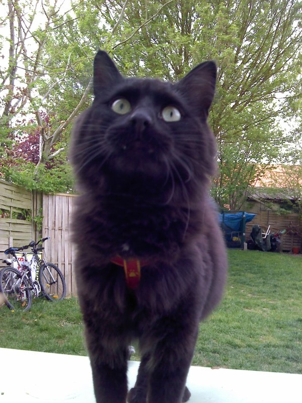 mon chat brigand