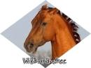 Photo de Wild-and--free