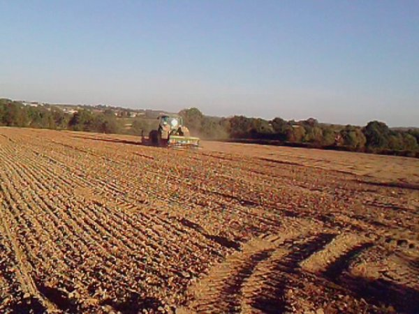 semis de colza et de ray grass