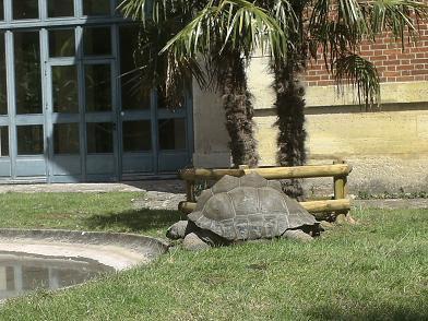 Ménagerie du Jardin des Plantes - tortue géante