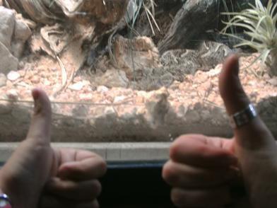 Ménagerie du Jardin des Plantes - serpent