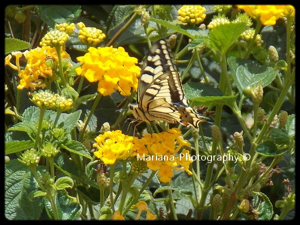 Tout en harmonie avec la nature !
