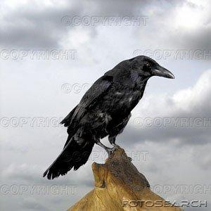 Tremblez !!! car je suis le corbeau !