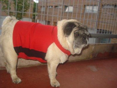Manteau pour chien fait par moi même de A -Z