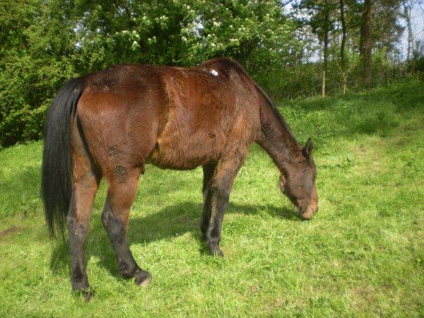 ne me dite pas que ce n'etes qu'un cheval je vous dirais que vous n'etes qu'un humain
