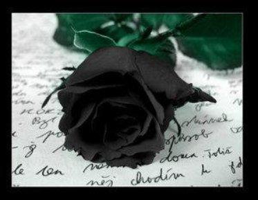 signification des roses noires | map titecampagne