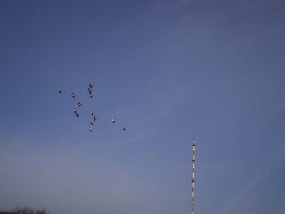 Volée des jeunes autour de l'antenne du Mont des Cats