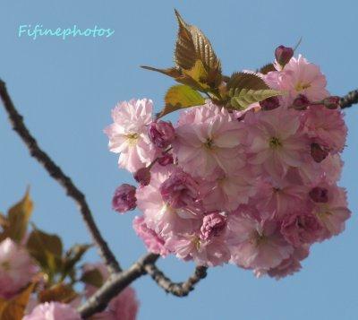 La nature en fleur