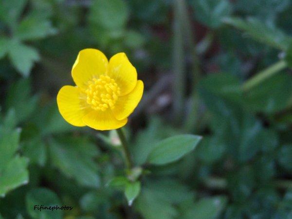 Une petite fleur au grand coeur