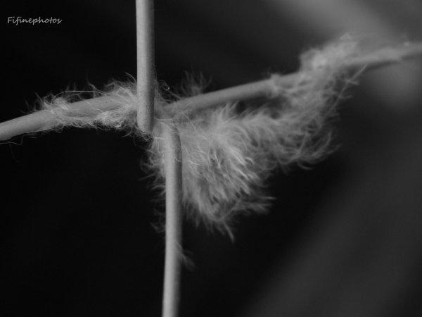La plume si légère désormé retenue