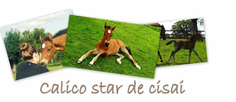 Calico star de cisai et Clémence Carbon.