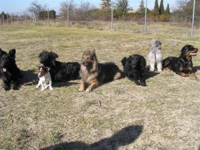 club canin jonquieres
