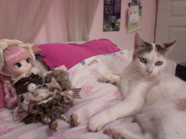 mon chat et ma pullip ^^