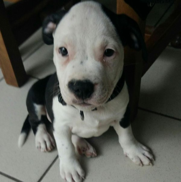 voici nikos le chien de mon fils