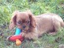 Photo de x-douggy-dog