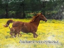 Nos amis les chevaux <3