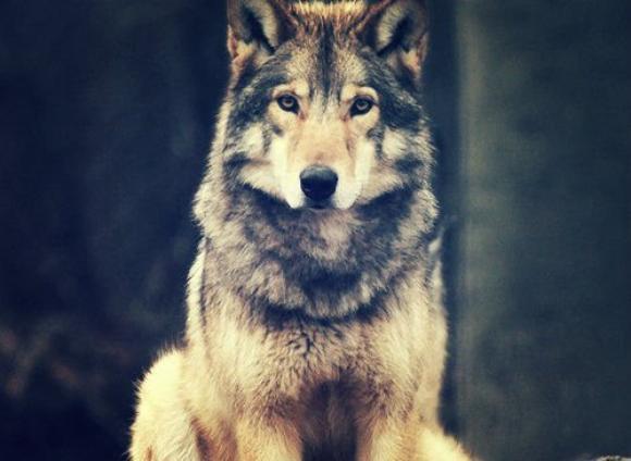 Teen Wolf (MAJ 20/08/13)