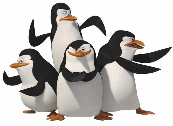 POURQUOI LES PINGOUINS N'ONT-ILS PAS FROID AUX YEUX ?