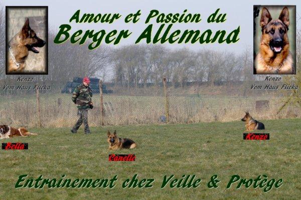 Amour et Passion du Berger Allemand