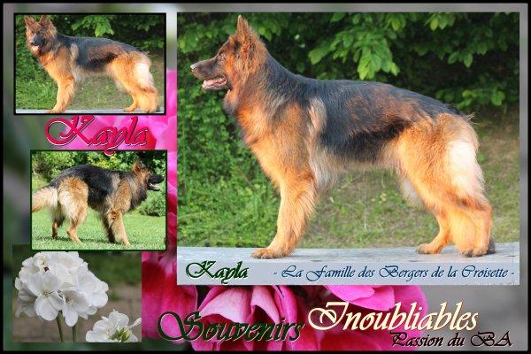 Notre Belle Kayla de la Famille des Bergers de la Croisette
