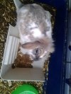 mes lapins