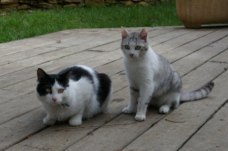 la c'es mes chats